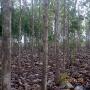 plantaciones forestales en venezuela - asesoria tecnica.
