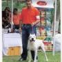 cachorros dogos argentino vendo