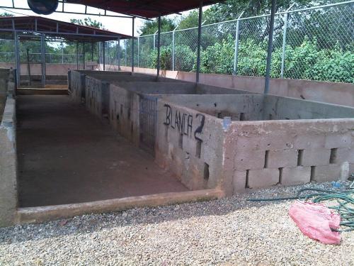 Fotos de Galpones, casa y terreno para cria de cerdos con agua y luz 3