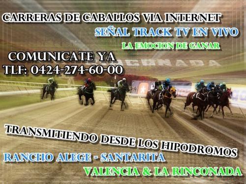 Carreras de caballos de venezuela via internet track tv en vivo