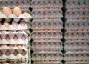 Vendo huevos por caja
