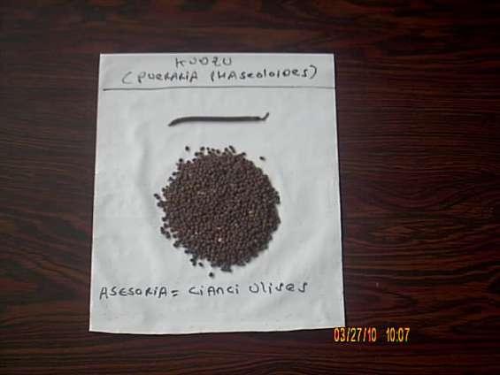 Semillas kudzu y desmodium colombia